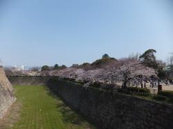 お濠付近の桜