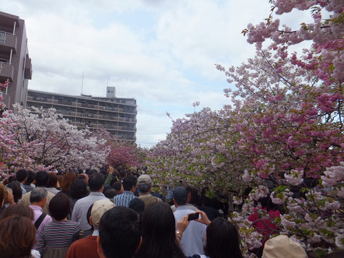 人混みの桜の通り抜け