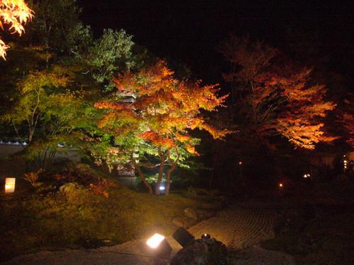 夜間の庭園風景