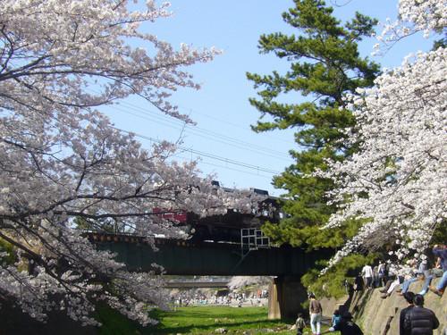 阪急電車とさくら