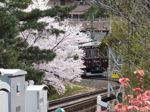 阪急・甲陽線と桜