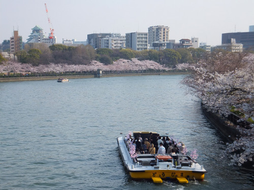 大阪の桜 【桜ノ宮・大川沿い】