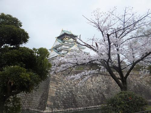 満開の大阪城周辺の桜