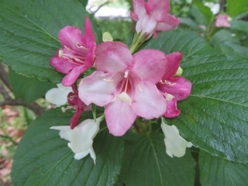 大阪城外堀の花々