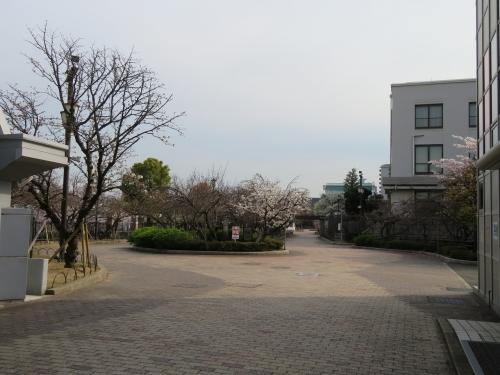 大阪造幣局・桜の通り抜け